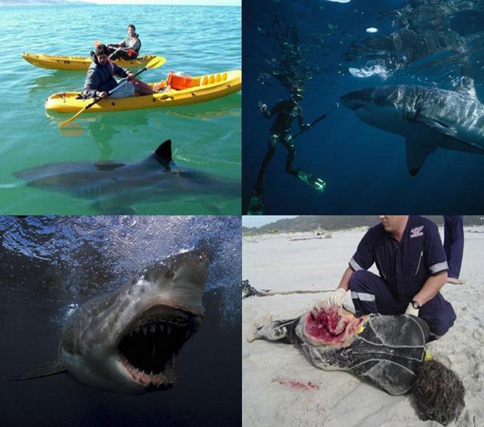 Фото нападения акул на людей