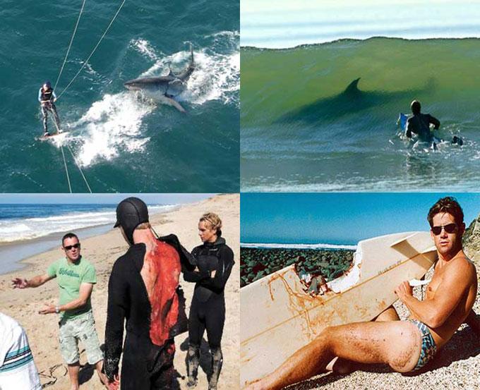 Нападения большой белой акулы