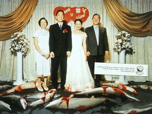 Свадьба в Китае - суп из акульих плавников