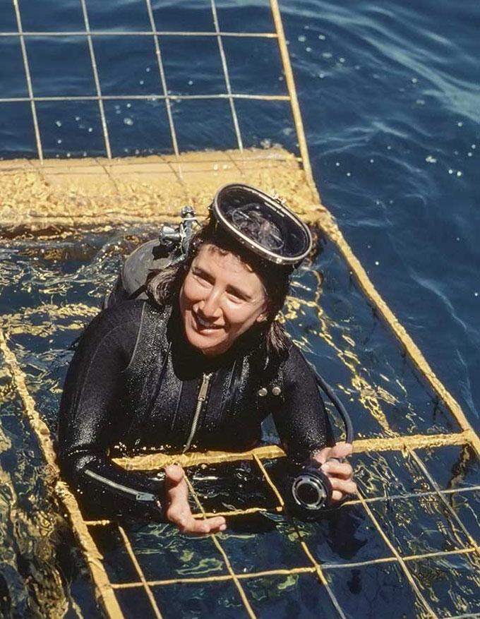 Фото: National Geographic - погружение в клетке к акулам