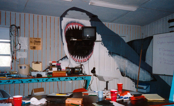 Фото: кабинет морского биолога и ученого Грубера
