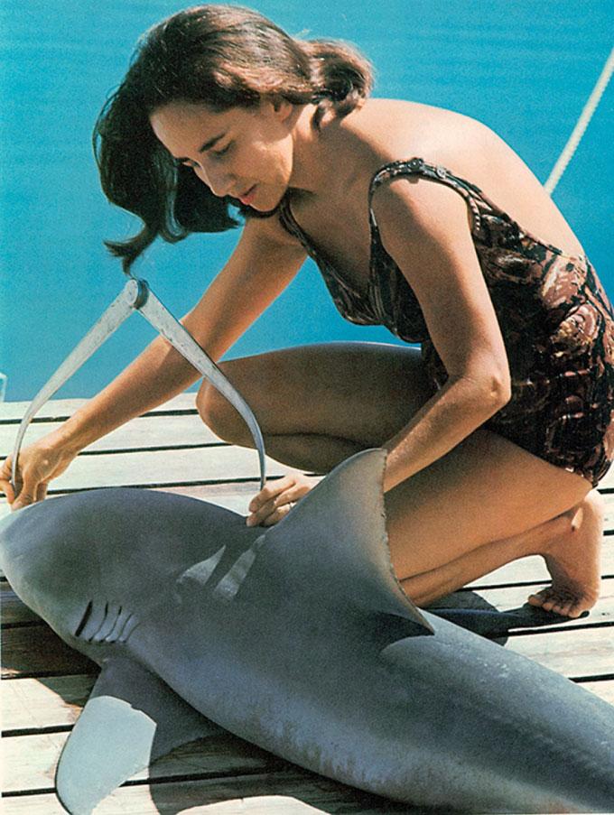 Фото: исследование акул