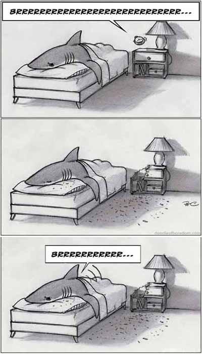 Акула и будильник