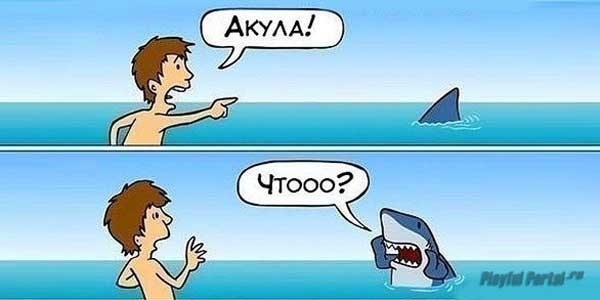 Здесь акула