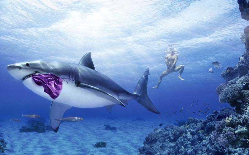 Акула отобрала трусы