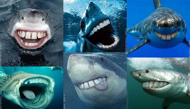 Акулы со смешными зубами