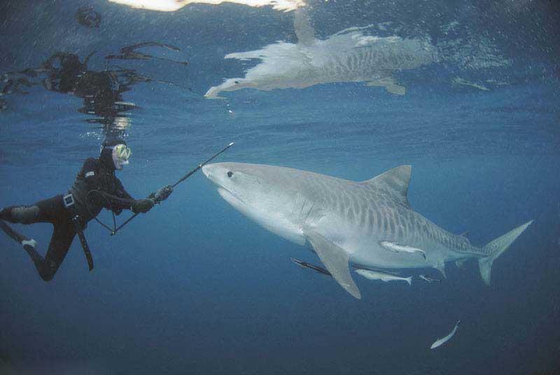 Акула и волшебная палочка