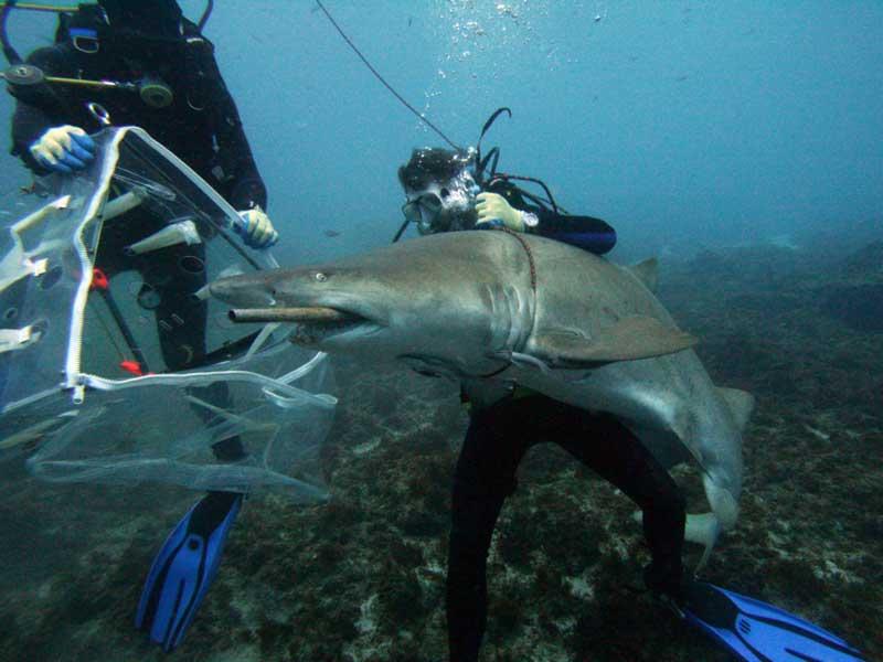 Минздрав предупреждал акулу