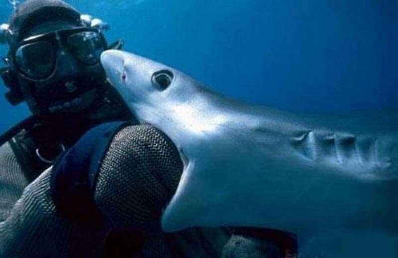Акула засосу досмерти
