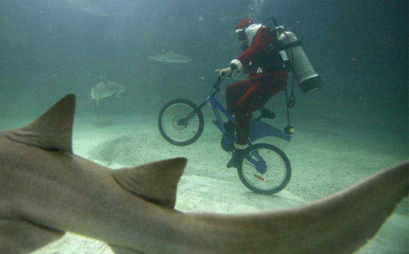 Дайвер на велосипеде с акулами
