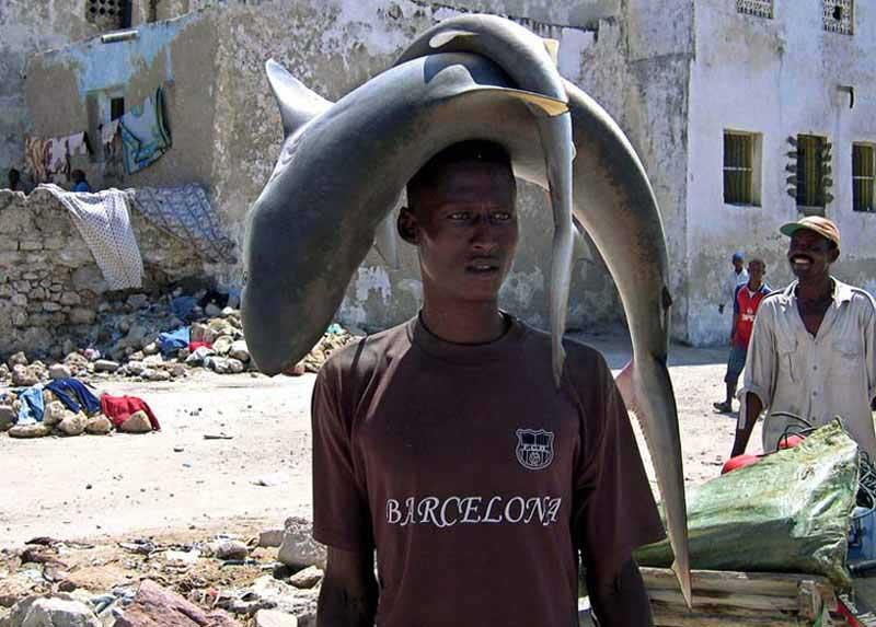 Акулы на голове