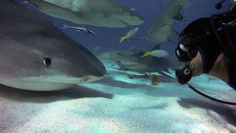 Акула смотрит на дайвера