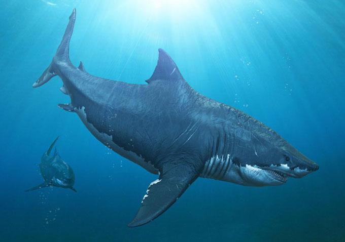 Megalolamna paradoxodon - новый вид древней акулы