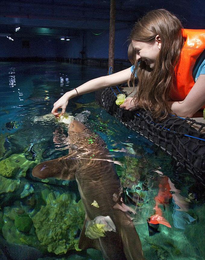 Фото: Акула-веган и морская вегетарианская пища