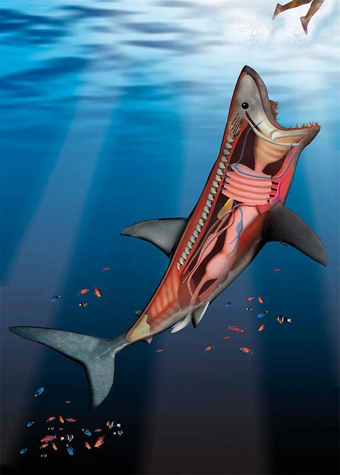 Почему акулы нападают на людей?