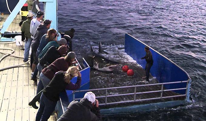 Фото: изучение и исследование акулы