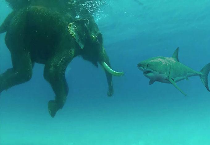 Дружба животных: Слон и акула