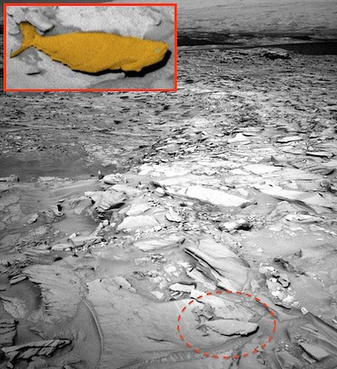 Фото: Жизнь на Марсе - обнаружены останки акул